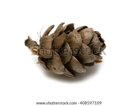 pine cone spruce on a white background isolated - stock photo