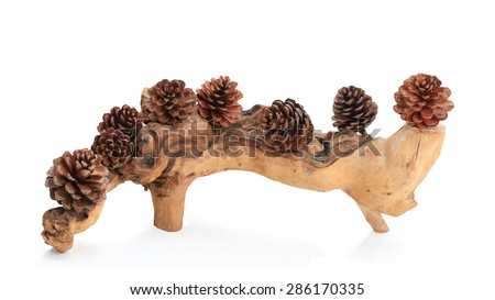 Pine cone with root dead wood  isolated on white background this has clipping path.  - stock photo