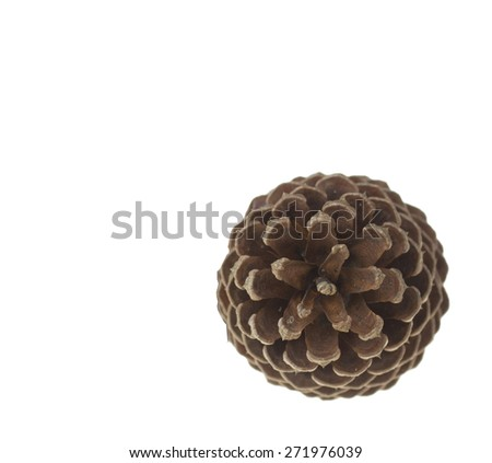 Pine Cones - stock photo