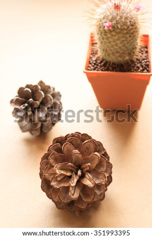 Pine cones and colorful cactus.