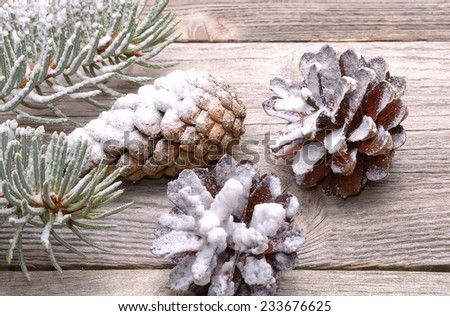 Pine cones and white spruce branch isolated on white background - stock photo