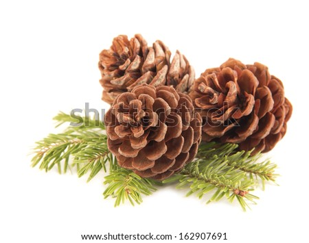 Pine cones close up at the fir branch - stock photo