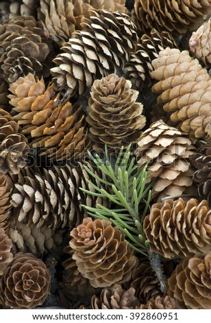 Pine cones form patterns at Roaring Mountain Picnic Grove in Yellowstone National Park, Wyoming - stock photo