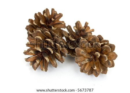 pine cones isolated over white with reflection