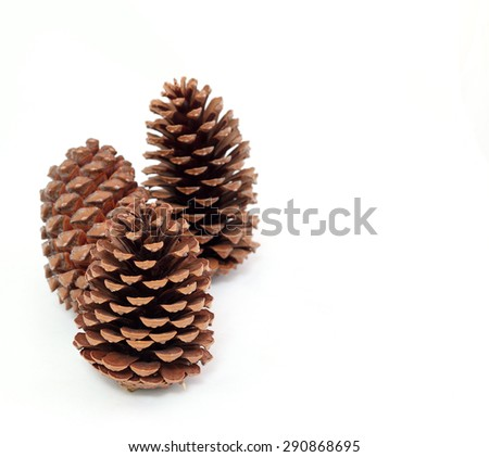 pine cones on a white background - stock photo