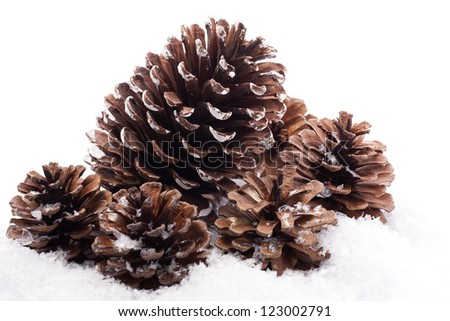 Pine cones on snowy background