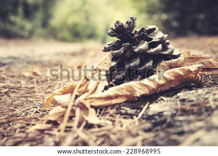 Pine cones on the ground in a forest. Filtered image with vintage effect  - stock photo