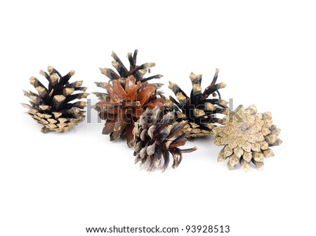 Pine cones over white background with shadow