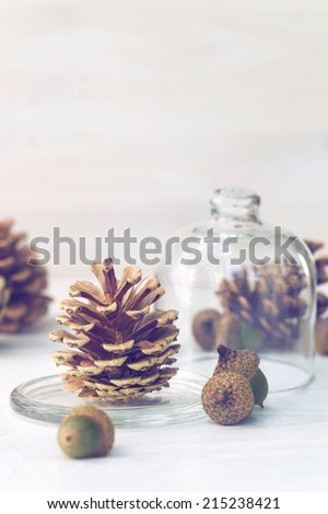 pine cones with acorns on white wooden texture