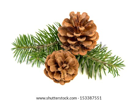 Pine cones with branch on a white background - stock photo