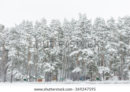 Pine forest and field covered with fresh snow. Garages for cars among trees. - stock photo