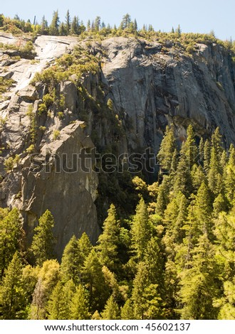 pine forest and granite cliff