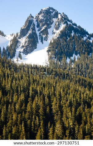Pine Forest and Jagged Mountain at Mount Rainier National Park - stock photo