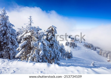Pine forest and ski slopes covered in snow on winter season in Poiana Brasov