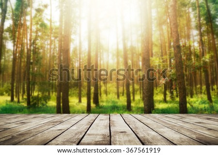 Pine forest. Beauty nature background - stock photo
