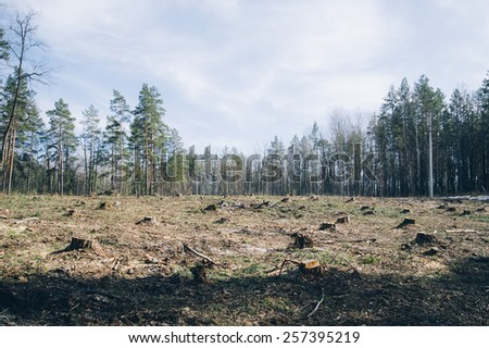 Pine forest being cut down turning into a dry lifeless field - stock photo