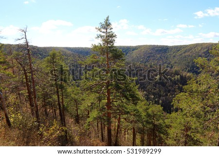 Pine forest in the autumn Zhiguli mountains