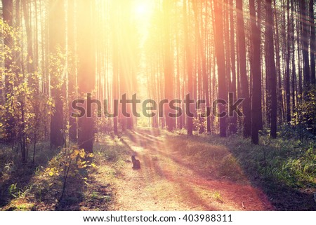 Pine forest in the morning. Silhouette of a cat sitting in the forest. Natural light  - stock photo