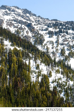 Pine Forest on Mountain at Olympic National Park - stock photo