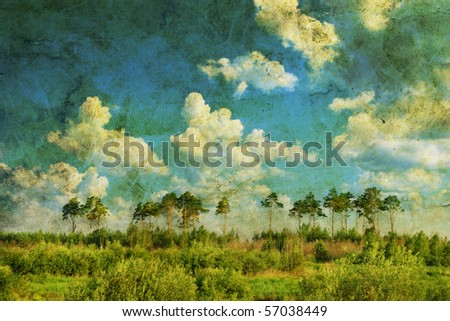 Pine forest over sky and a meadow - stock photo