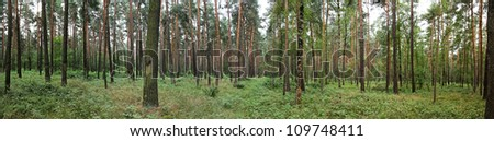 pine forest panorama - stock photo