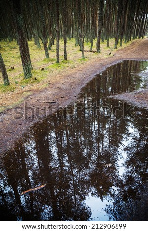 Pine forest reflected in a puddle. - stock photo