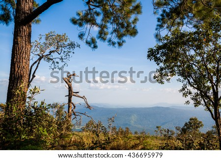 pine forest with meadow and blue sky