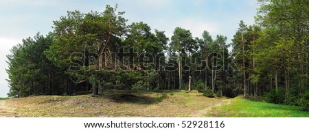 pine forest with sand path and green grass meadow