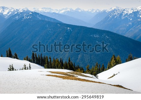 Pine Forest with Snow Capped Mountains at Olympic National Park  - stock photo