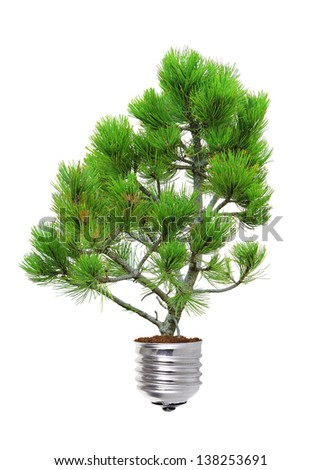 pine growing from the base of the light bulb isolated over white  - stock photo