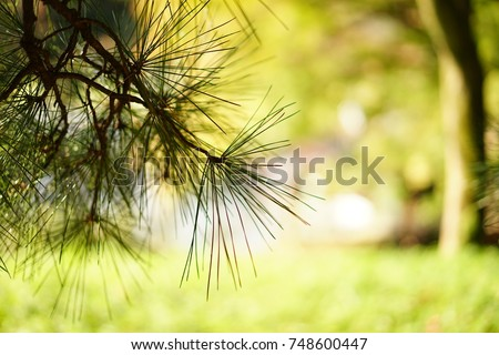 https://thumb7.shutterstock.com/display_pic_with_logo/167494286/748600447/stock-photo-pine-in-a-japanese-garden-in-autumn-748600447.jpg