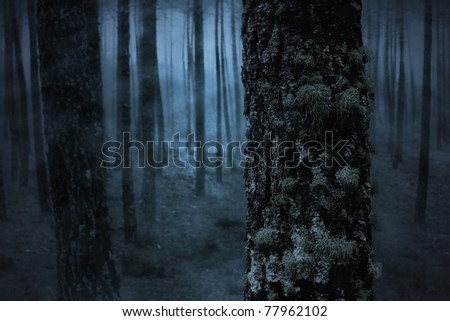 Pine in a spooky foggy forest - stock photo