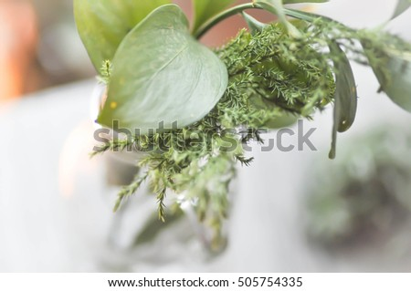 pine leaf,green leaves in the vase