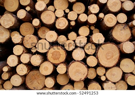 Pine Logs Background