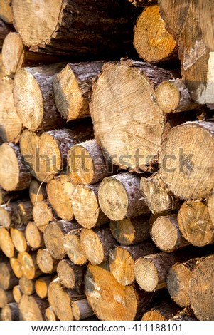 Pine logs cut during forestry, left to season over winter. Photographed on a sunny afternoon in Autumn. Portrait. - stock photo