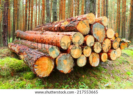Pine logs in the forest. - stock photo
