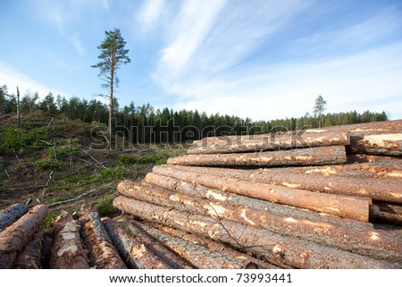 Pine logs, industrial way to get reniewable resources - stock photo