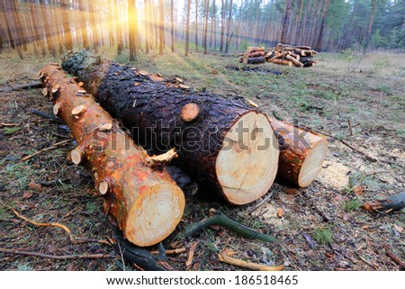 pine logs on forest's clearing - stock photo