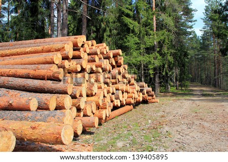 Pine logs stacked by a spring forest road. - stock photo