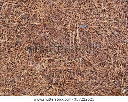 Pine Needle or Pine Straw Covered Forest Floor - stock photo