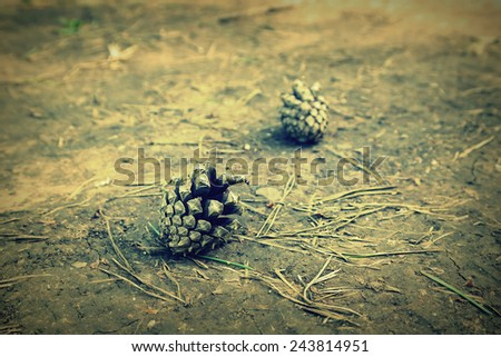 Pine needles and cones on the ground, shallow dof - stock photo