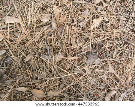 Pine Needles Texture - stock photo