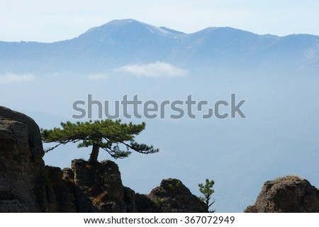 Pine on a background of mountains. The tree grows on top of the  - stock photo