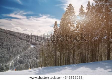 Pine on a mountain slope. Beautiful blue sky. - stock photo