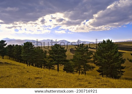 Pine on the hill - stock photo