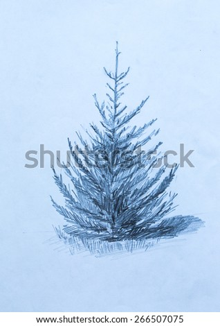 Pine, pencil drawing