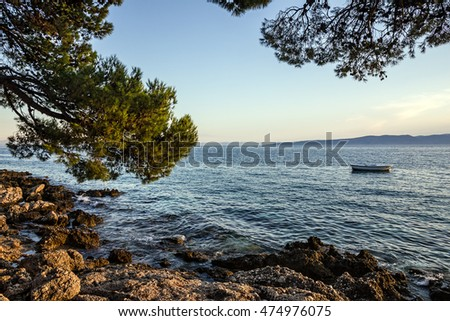 Pine seaside of Adriatic sea, Croatia, Dalmatia Makarska coast