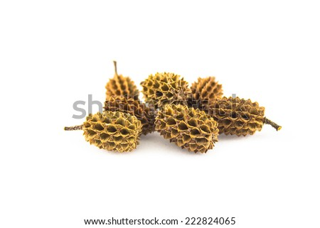 pine seed on white background - stock photo