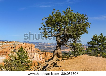 Pine shines against Bryce Canyon Utah cliffs with breathtaking rock formations in the background. Bryce Canyon National Park Utah - stock photo