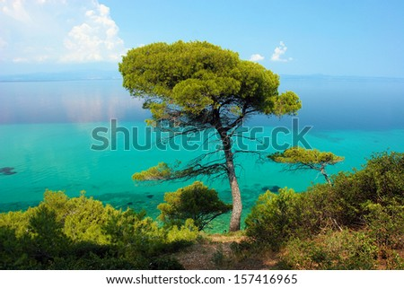 Pine tree against blue lagoon with turquoise sea - stock photo